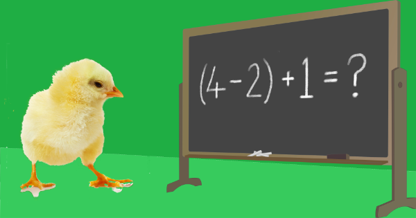 chick with blackboard