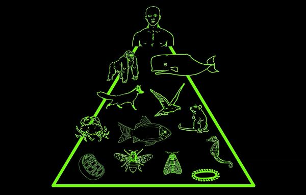 traditional view of humans at top of species pyramid